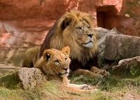 Safari en Tanzanie en famille