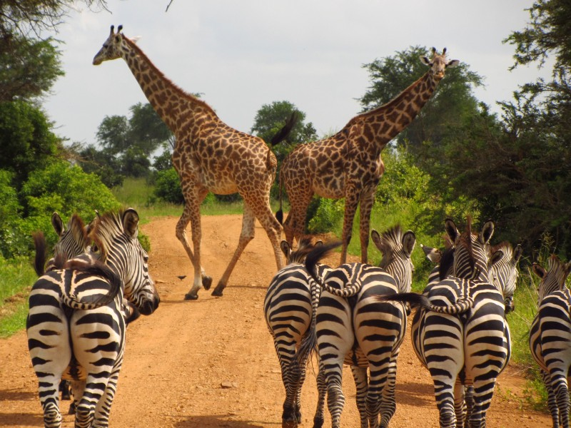 Découverte de la Tanzanie